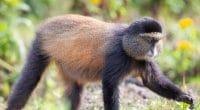 RWANDA : le parc national de Gishwati-Mukura classé réserve de biosphère par l'Unesco©Zaruba Ondrej/Shutterstock