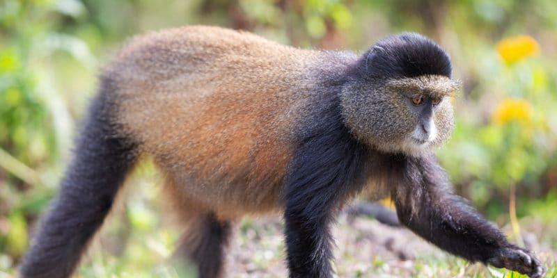 RWANDA: Gishwati-Mukura National Park classified as a biosphere reserve by UNESCO©Zaruba Ondrej/Shutterstock