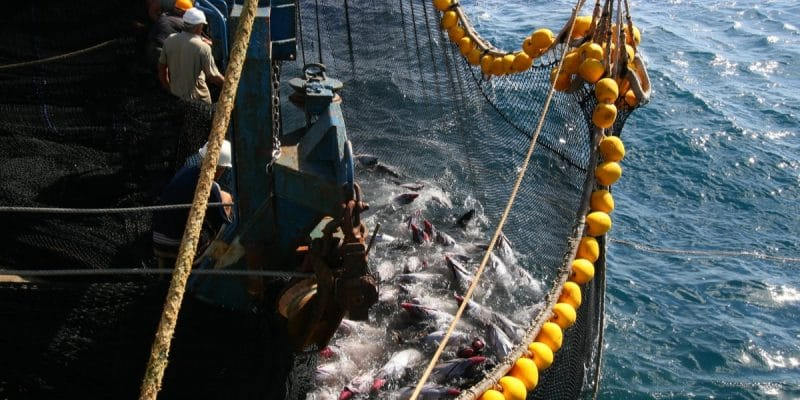 MAURICE : des supermarchés européens exigent la pêche durable des thons©Uladzimir Navumenka/Shutterstock
