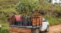 RWANDA : 28 M€ pour la restauration des forêts dégradées d'Amayaga©PlataRoncallo/Shutterstock