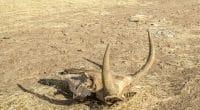AFRIQUE : augmentation des catastrophes climatiques, l'ONU craint le pire ©Torsten Pursche/Shutterstock