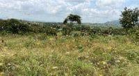 SÉNÉGAL : la moissonneuse à criquets lutte écologiquement contre l'invasion acridienne©Nicole Macheroux-Denault/Shutterstock
