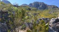 MOZAMBIQUE: le gouvernement transforme la réserve de Chimanimani en parc national ©Cloete55/Shutterstock