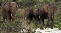 GABON : le changement climatique affame les éléphants du parc de la Lopé©zahorec/Shutterstock
