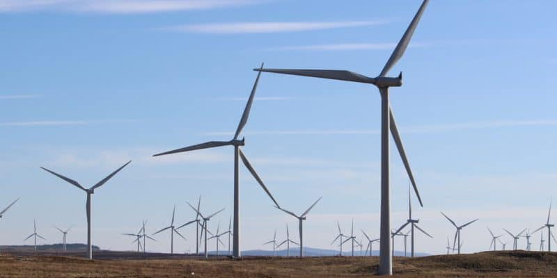 EGYPT: UAE investors obtain land for 500 MW wind farm©David Falconer/Shutterstock