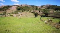ÉTHIOPIE : 7 entreprises en lice pour des forages sur le site géothermique de Corbetti©InfraCo Africa