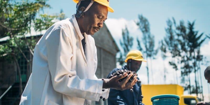 KENYA: Doen finances Horizon for the sustainable use of Mount Kenya's forests©Horizon Essential Oils