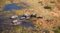 AFRICA: Oil exploitation threatens biodiversity in the Okavango Basin ©Gaston Piccinetti/Shutterstock