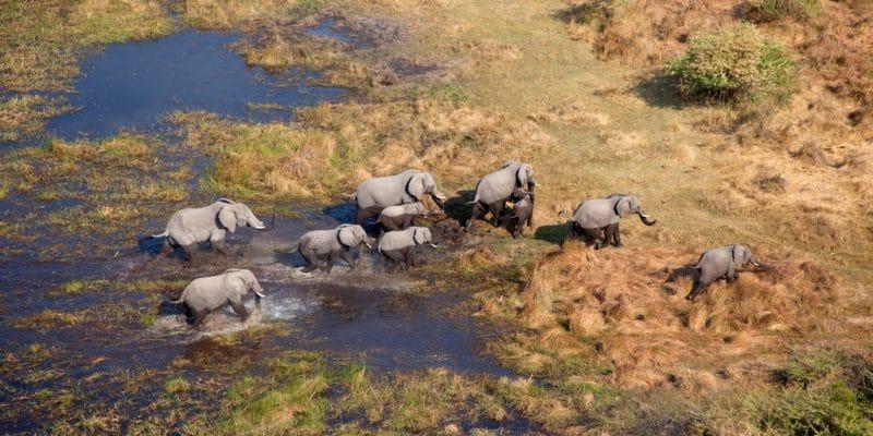 AFRIQUE : l'exploitation pétrolière menace la biodiversité du bassin de l'Okavango©Gaston Piccinetti/Shutterstock