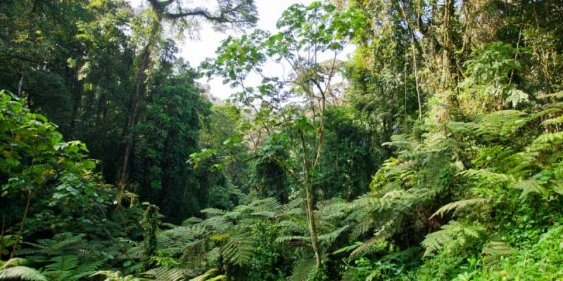 CONGO: the challenges of implementing the Redd+ process on forest management ©Travel Stock/Shutterstock
