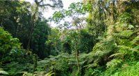 CONGO : les défis de la mise en œuvre du processus Redd+ sur la gestion des forêts©Travel Stock/Shutterstock