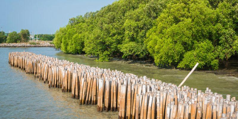 SENEGAL: Government launches coastal zone management project©YuRi Photolife/Shutterstock