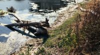 TCHAD : Green Earth milite contre les dégâts environnementaux en temps de conflit©Skeronov/Shutterstock