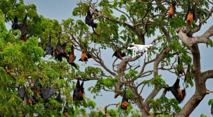 SENEGAL: The State is studying the drone trail for the security of its national parks©©Ondrej Prosicky/Shutterstock