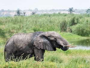 AFRICA: Migration as a solution to the overpopulation of elephants in Botswana?