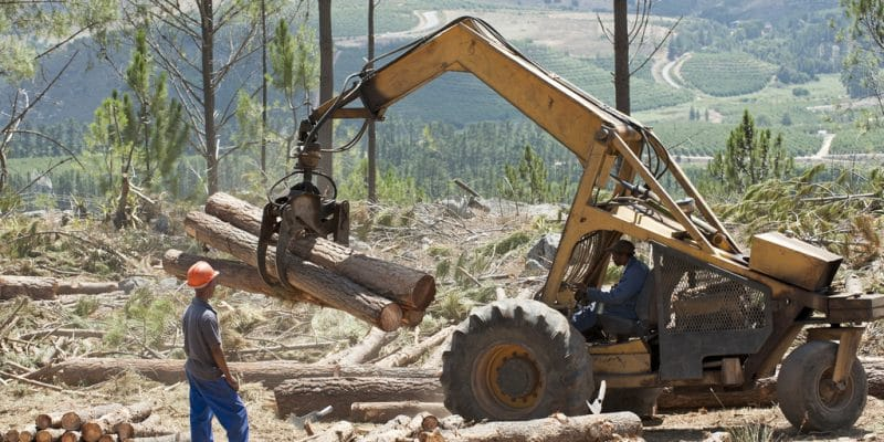 GHANA : Rainforest soutient la lutte contre la déforestation à Sefwi-Wiawso ©Peter Titmuss/Shutterstock