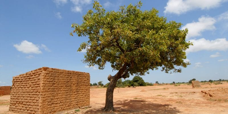 MALI: Government strengthens shea park with 8,400 additional plants ©africa924/Shutterstock