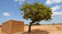 MALI : le gouvernement renforce le parc à karité avec 8400 plants supplémentaires©africa924/Shutterstock