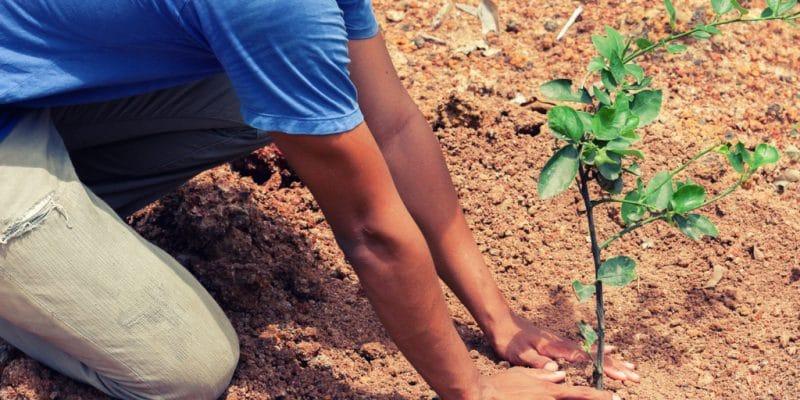 SENEGAL: Dangote Cement rehabilitates the Ngomène mining site and plants 5,000 trees©Thep Photos/Shutterstock
