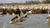 SENEGAL: FAO supports bird conservation in the Senegal River Delta©Watch The World/Shutterstock
