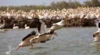 SÉNÉGAL : la FAO soutient la conservation des oiseaux dans le delta du fleuve Sénégal©Watch The World/Shutterstock