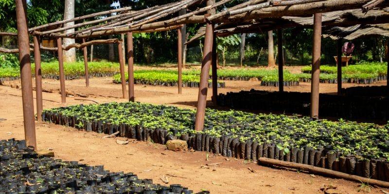 AFRIQUE DU SUD : le gouvernement finance 13 projets verts portés par des jeunes ©Dennis Wegewijs/Shutterstock