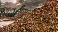 AFRIQUE DU SUD : l'usine de Coega va reprendre la production des granulés de biomasse©Juan Enrique del Barrio/Shutterstock