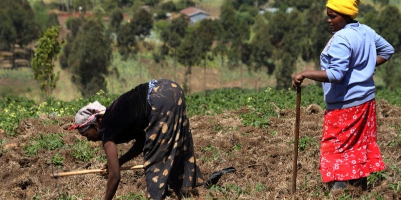 BURUNDI: AfDB provides $20 million for climate resilience of farmers and pastoralists©hecke61/Shutterstock