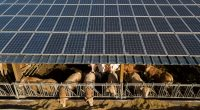 EGYPT: EBRD lends $4.2m for a 6 MWp solar power plant at Dina farm©SpiritProd33/Shutterstock