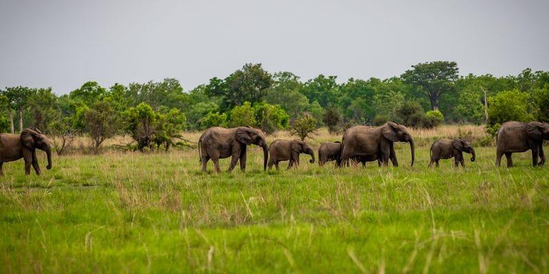 BENIN: satellite collars to protect wildlife in Pendjari and W parks©Gilles COMLANVI/Shutterstock