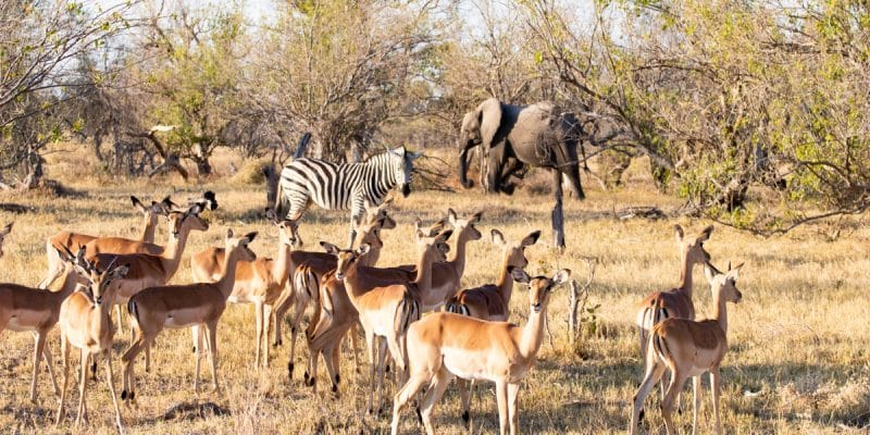 SOUTH AFRICA: the government approves 2 documents to preserve biodiversity©Paolo De Gasperis/Shutterstock