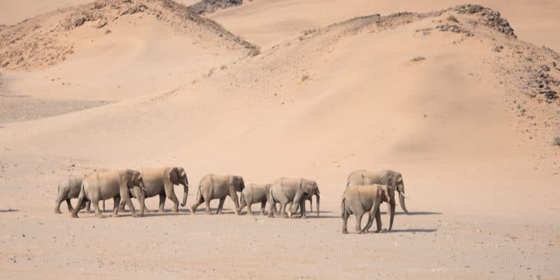 NAMIBIA: Government to sell 200 drought-threatened elephants ©The Nomadic People/Shutterstock