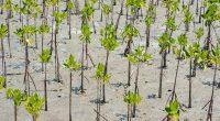 COTE D'IVOIRE : l'État lance le projet Folab pour restaurer les paysages forestiers©Sonthaya/Shutterstock