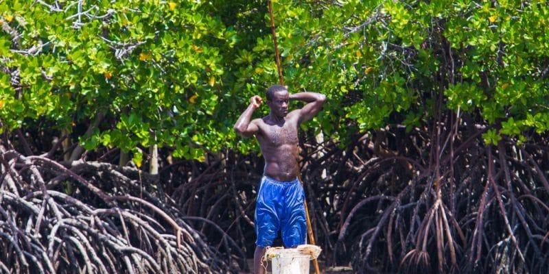 AFRICA: EU grants €9.9m to FDA and WIA for wetland conservation ©Marius Dobilas/Shutterstock