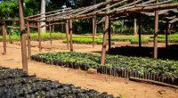 MALAWI : le gouvernement compte planter plus de 60 millions d'arbres en 4 mois ©Dennis Wegewijs/Shutterstock