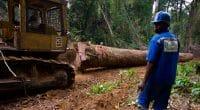 CONGO BASIN: Pulitzer Center launches a network of forest surveyors ©TOWANDA1961/Shutterstock