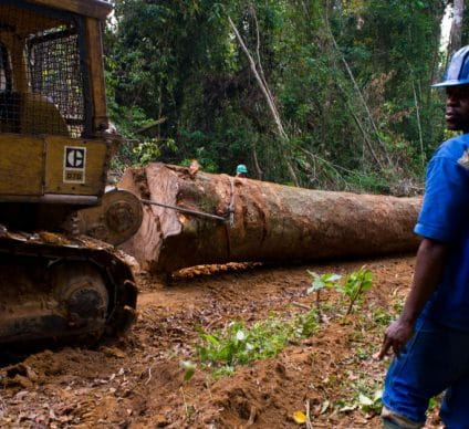 CONGO BASIN: Pulitzer Center launches a network of forest surveyors ©TOWANDA1961/Shutterstock