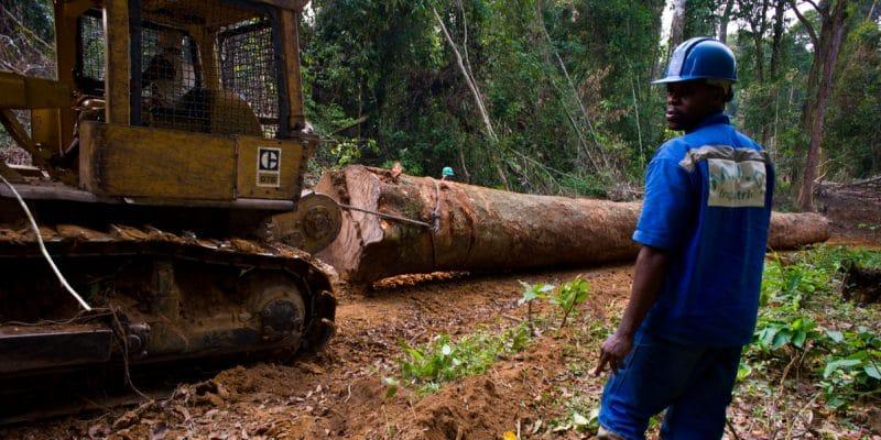 BASSIN DU CONGO : le Pulitzer Center lance un réseau d'enquêteurs sur les forêts©TOWANDA1961/Shutterstock