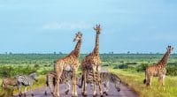 AFRIQUE DU SUD : Peace Parks participera aux © PACO COMO/Shutterstock: