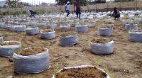 GHANA : Farmers Hope va valoriser les déchets de cacao à Kumasi©Farmers Hope
