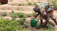 SÉNÉGAL : le projet FAR pour la résilience des femmes au changement climatique©BOULENGER Xavier/Shutterstock