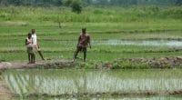 ZIMBABWE : l'État va réinstaller 180 agriculteurs sur des terres irrigables©BOULENGER Xavier/Shutterstock