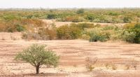 SAHEL: AfDB pledges US$ 6.5 billion for the Great Green Wall initiative over 5 years ©mbrand85/Shutterstock