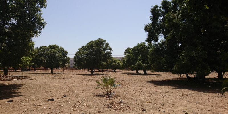 CHAD: Shakal plants 3,000 trees in Bahr El Ghazal to counter the advancing desert©Pascal Vosicki/Shutterstock
