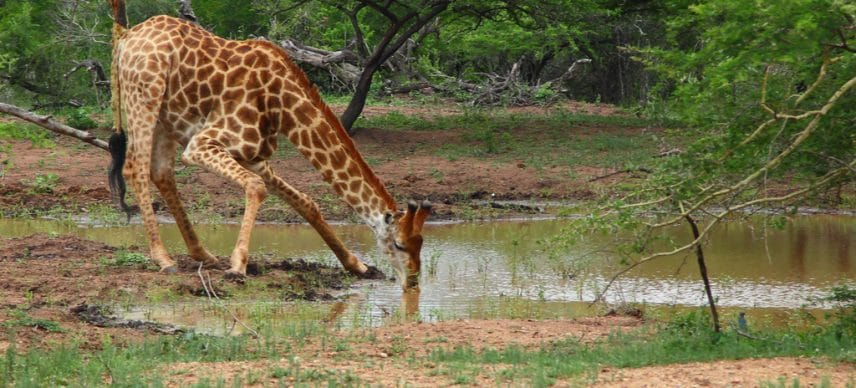 AFRICA: AFD pledges one billion euros for biodiversity preservation©Gergo Nagy/Shutterstock