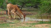 AFRIQUE : un milliard d'euros de l'AFD pour la préservation de la biodiversité©Gergo Nagy/Shutterstock