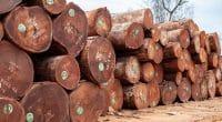CAMEROUN : le trafic du bois avec le Vietnam menace la biodiversité et l'économie©Ayotography/Shutterstock