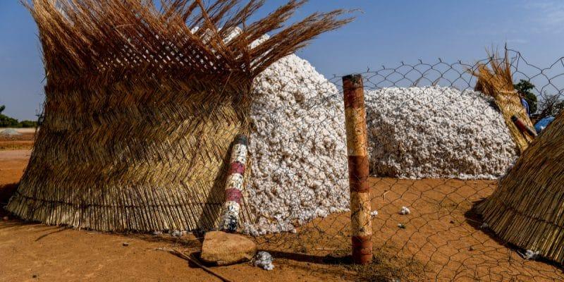 "AFRICA: ""CmiA"" organic cotton clothing arrives in Lidl shops in Switzerland©Alexander BEE/Shutterstock"