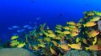 AFRIQUE : l'AFD soutient la préservation des aires marines protégées en Méditerranée©Rich Carey/Shutterstock