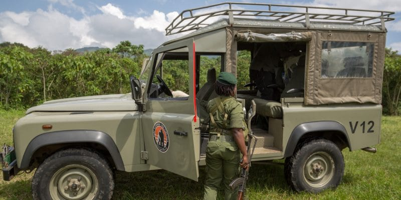 DRC: the murder of 6 rangers raises the question of security in Virunga